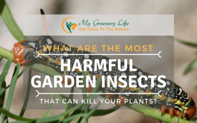 the-Most-Harmful-Garden-Insects-That-Can-Kill-Your-Plants-1