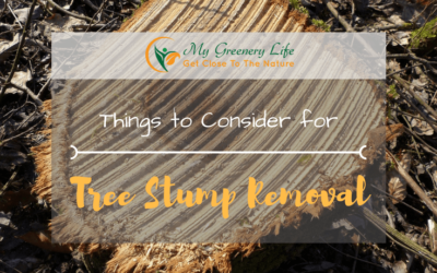 things-to-consider-for-tree-stump-removal