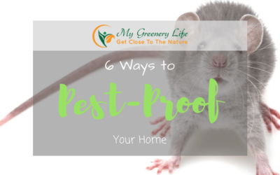 6-ways-to-pest-proof-your-home-1