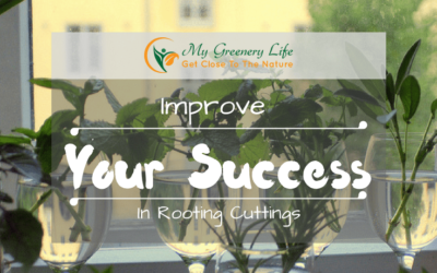 Improve-Your-Success-In-Rooting-Cuttings-1