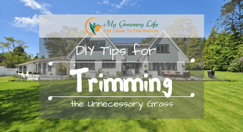 diy-tips-for-trimming-the-unnecessary-grass-1