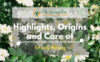 highlights-origins-care-shrub-roses-1