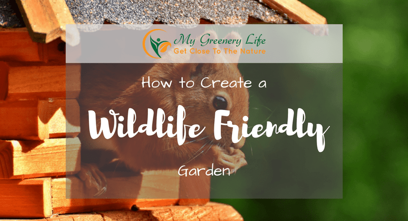 how-to-create-a-wildlife-friendly-garden-1