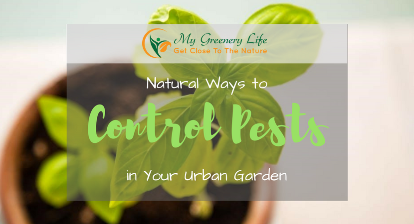 natural-ways-to-control-pests-in-your-urban-garden-1