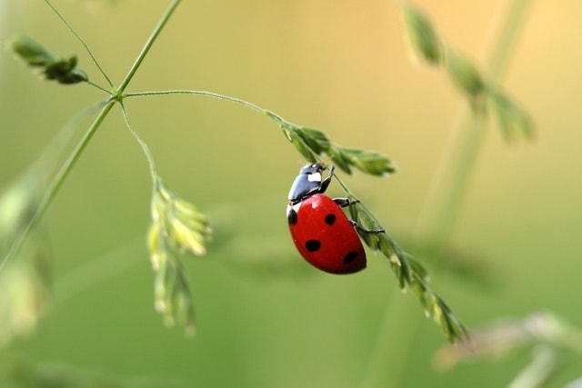 natural-ways-to-control-pests-in-your-urban-garden-2