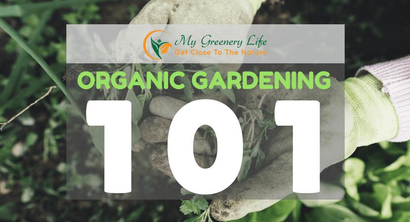 organic-gardening-101-1