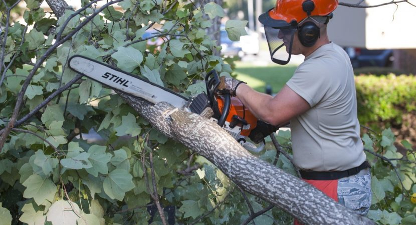 5 Reasons To Hire A Tree Cutting Service