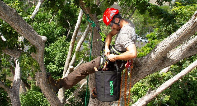 How Much Does It Cost to Have an Arborist Look at a Tree ...